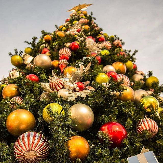 Check out montereychristmas.com for all the great holiday events on the Monterey Coast! #centralcoast #monterey #montereychristmas #christmas #christmastree #carmel #pacificgrove #montereycounty