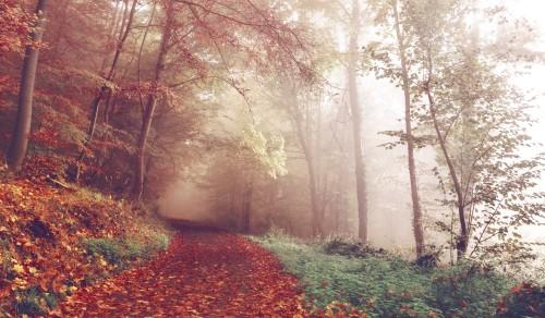 Photo credit: unsplash.com_SUnrau