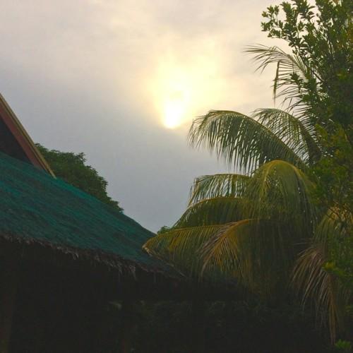 sun_palm_rvm