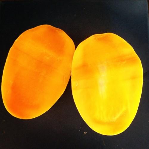tu-od_mango