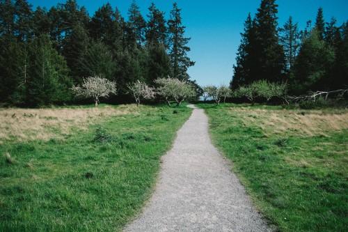 unsplash_path_thru_grass