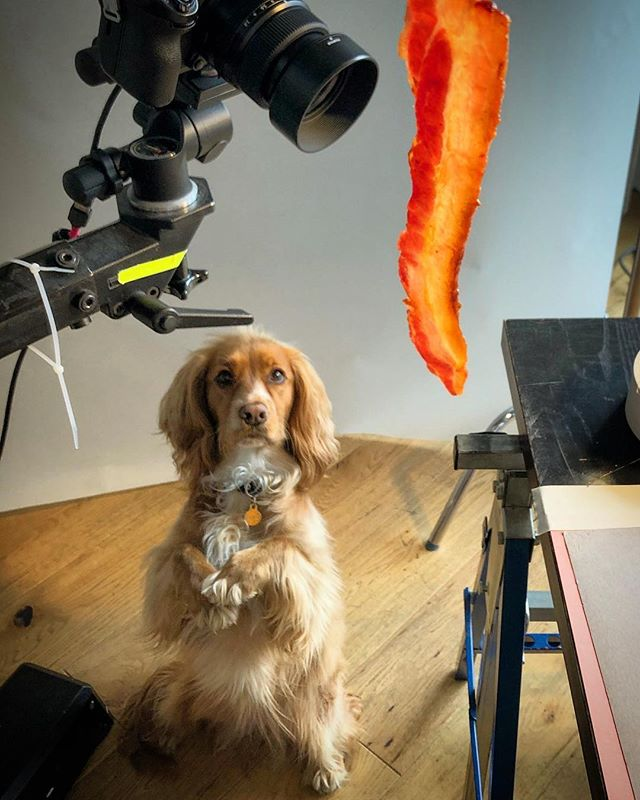 Top assistant @pepperoni_puppy on set today with @saskia.sidey & @stuart_harper #testing