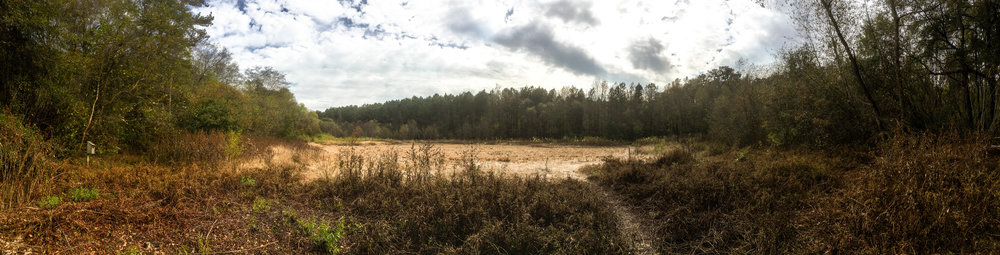 Beaver pond during the drought, November 12, 2016