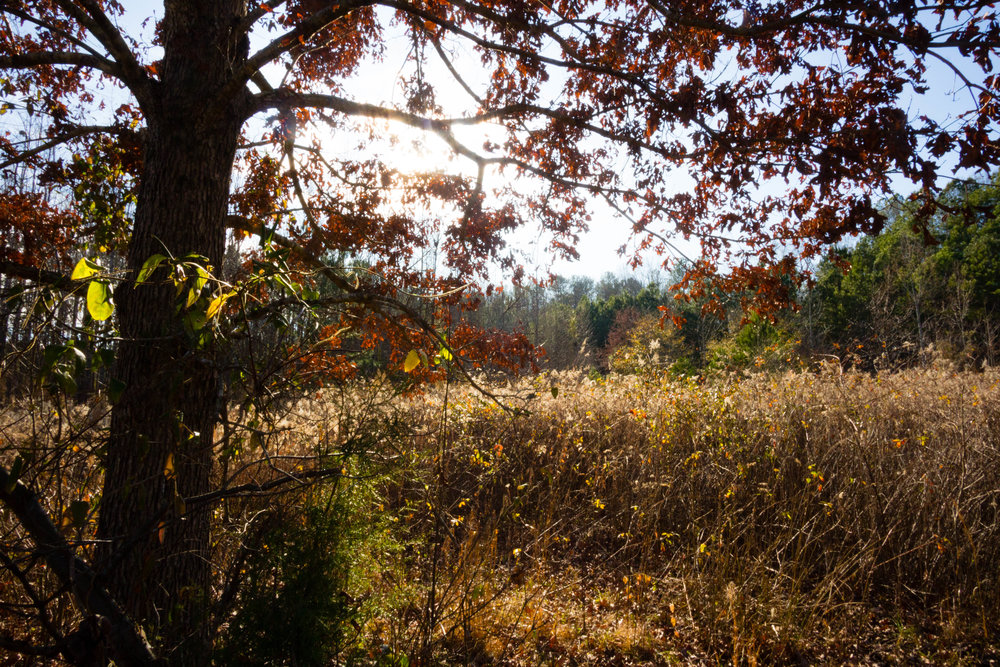 Songbird Habitat Trail, January 5, 2017