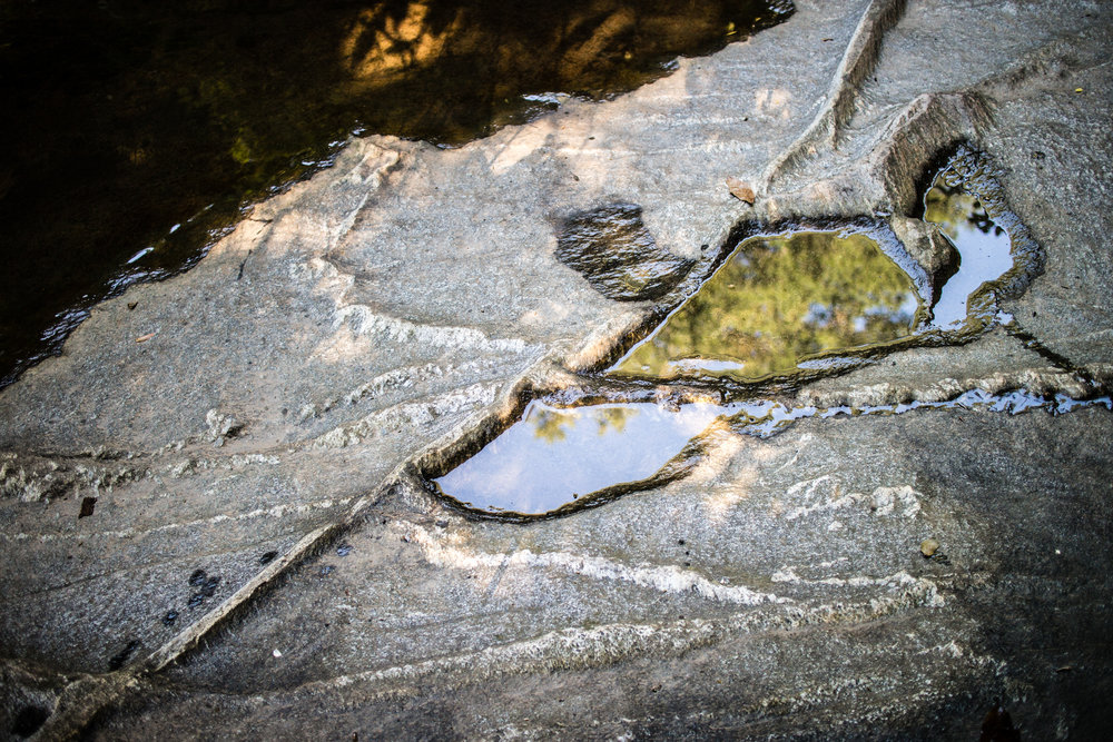 daniel-johnson-nature-preserve--herbert-taylor-park_14633553969_o.jpg
