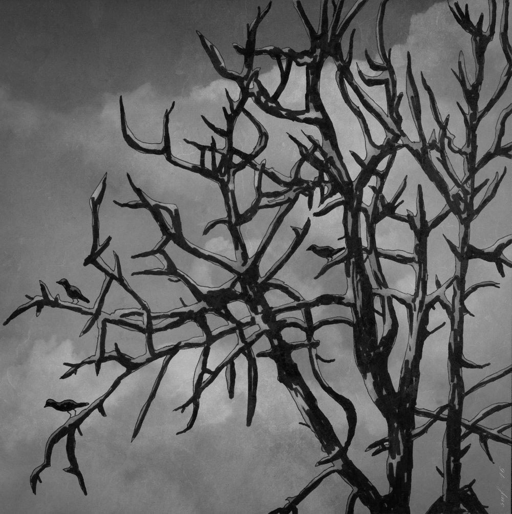 B/W Tree 2016