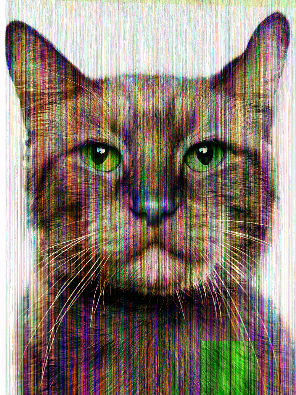 Glitch Cat (Morris), 2014 - Jill Greenberg