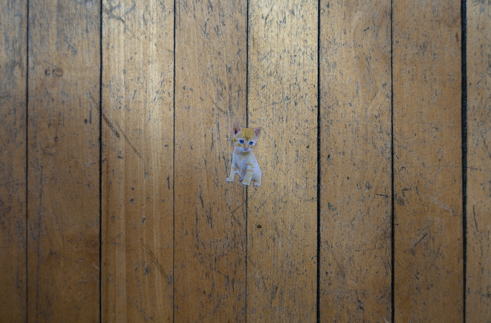 Kitten on the Crack, 2013 - Lex Thompson