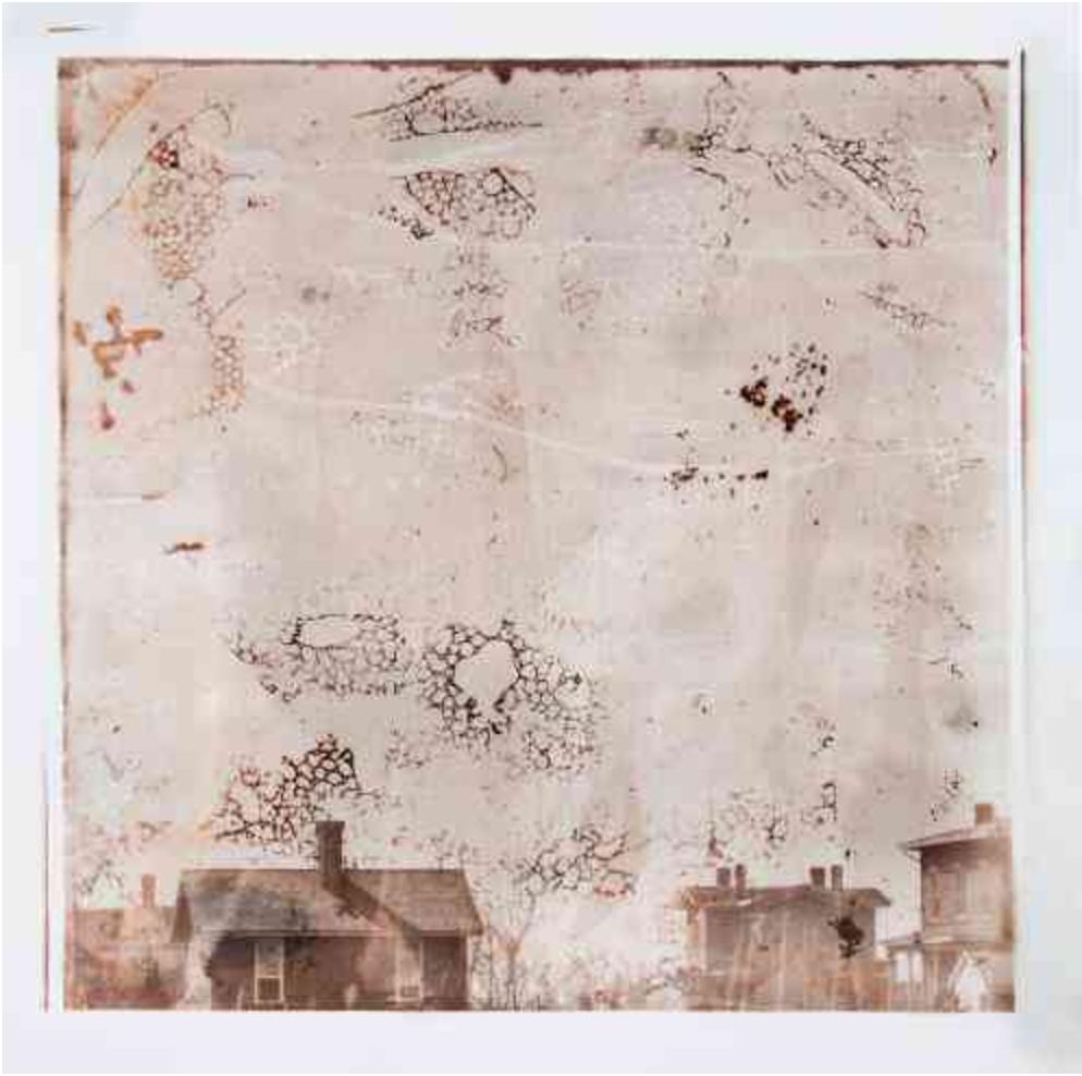 Saddest Kitten, 2012 - Jamie Campbell