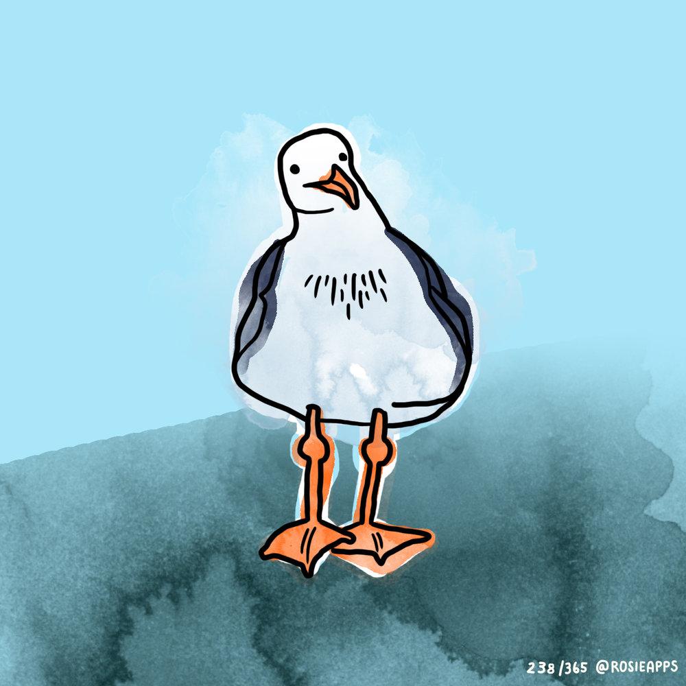 August-238-365 seagull.jpg