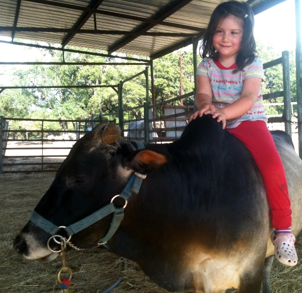 kids-and-bull.jpg
