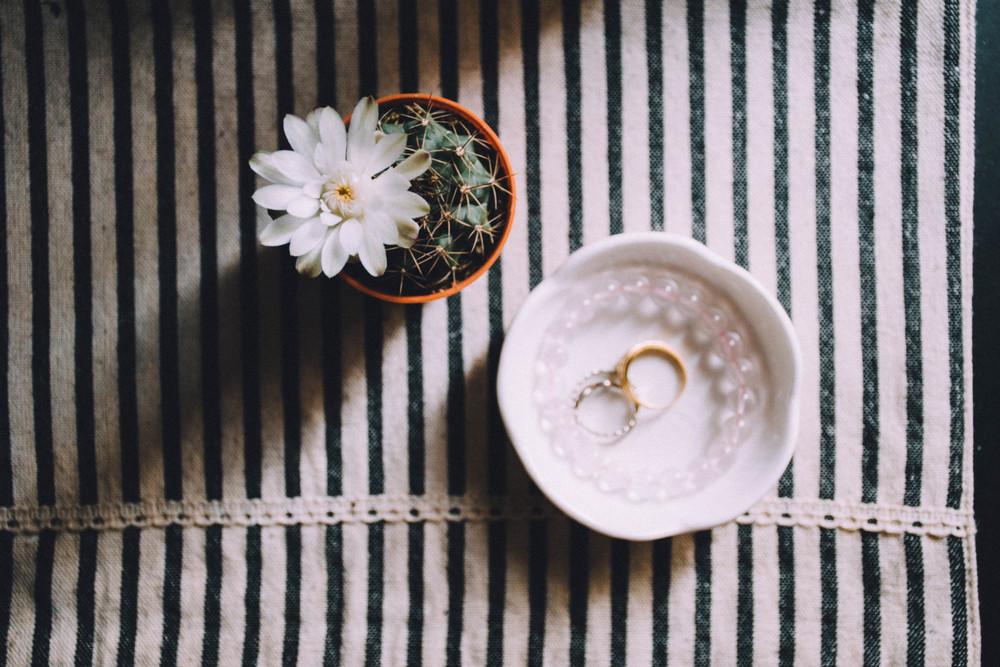 flowering cactus, 2015