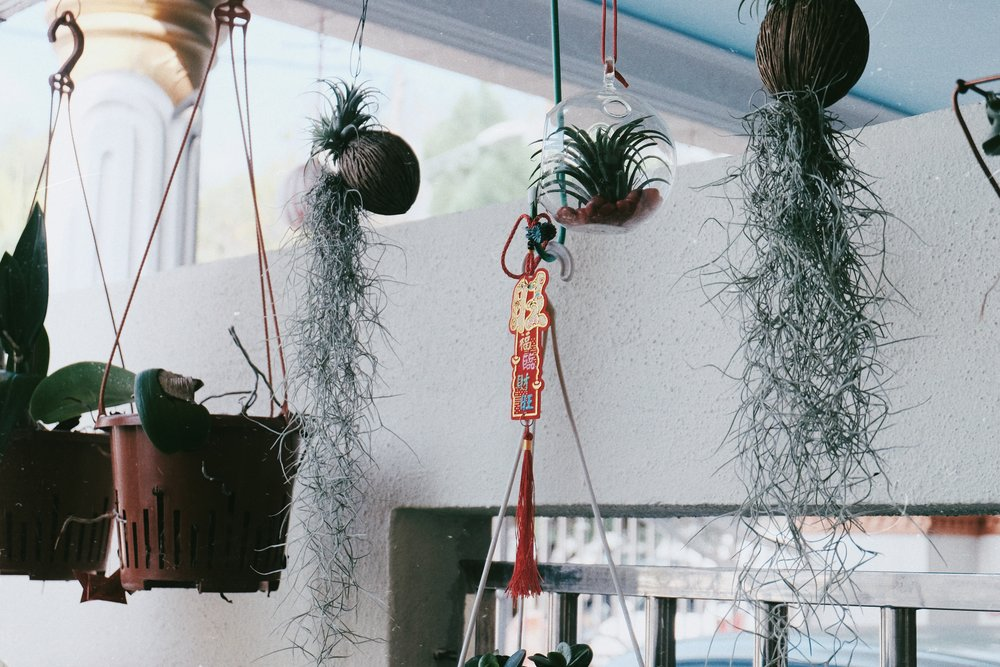 Some airplants at the front porch. The cutest.