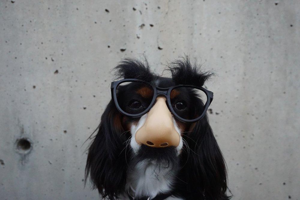 puppy 5.jpg