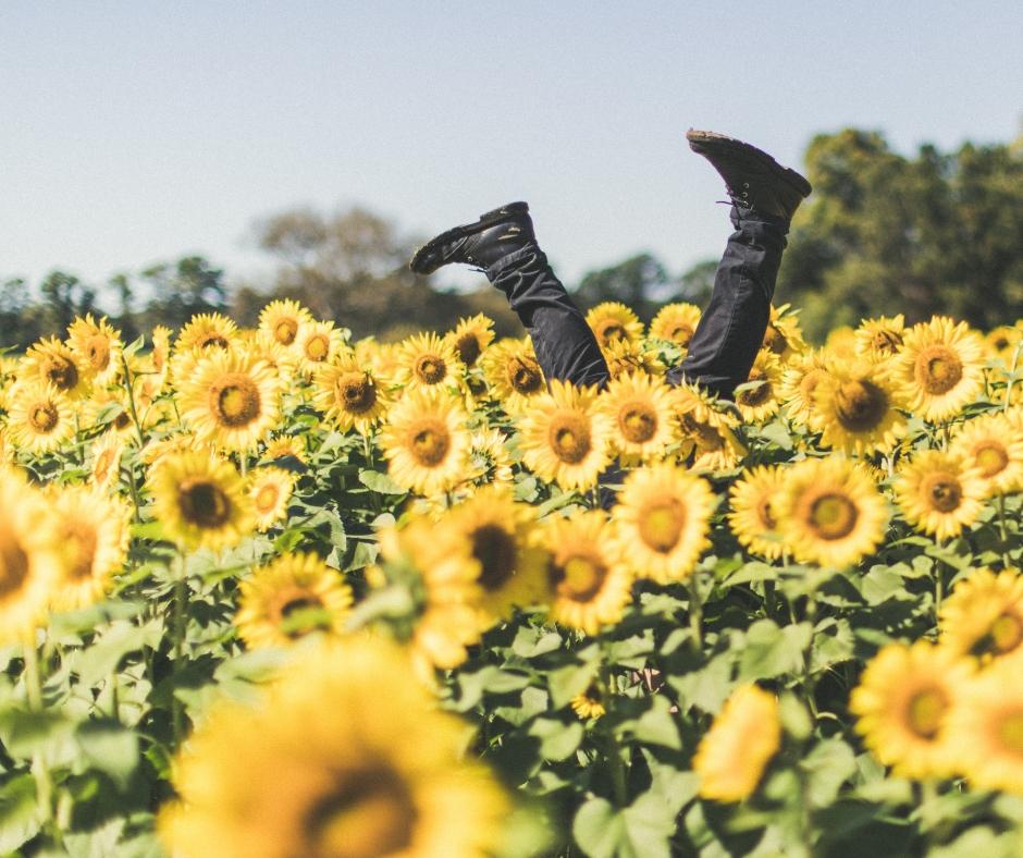 sunflowers happy fb.jpg