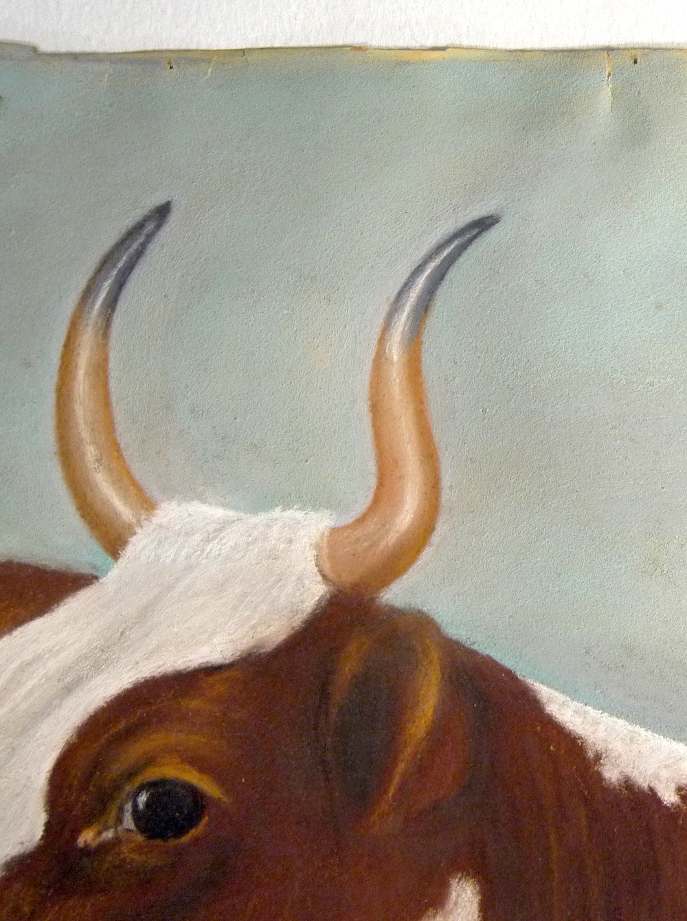 Detail of  Ayrshire Cow  after conservation, mould spots have been removed.