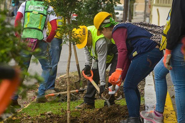 🌳 54 árboles después, nuestro distrito es más verde gracias a vecinos y voluntarios y al apoyo de Reforestación Extrema y el municipio de Monterrey.  Esta fue la primera de muchas brigadas de reforestación, ¡súmate al esfuerzo!