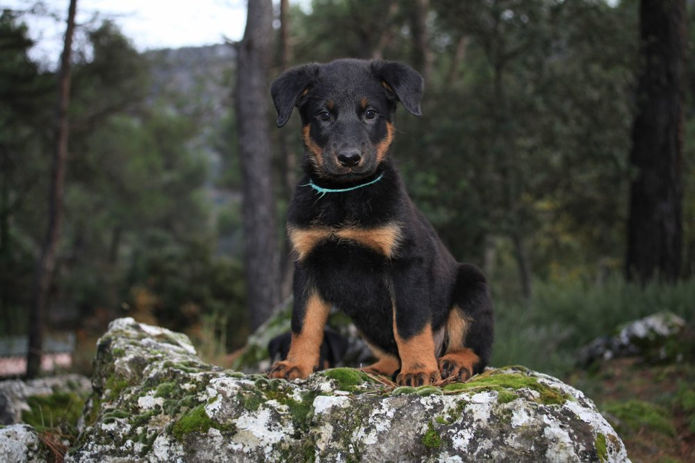 Jacqueline Plank - Jill puppy shot.jpg