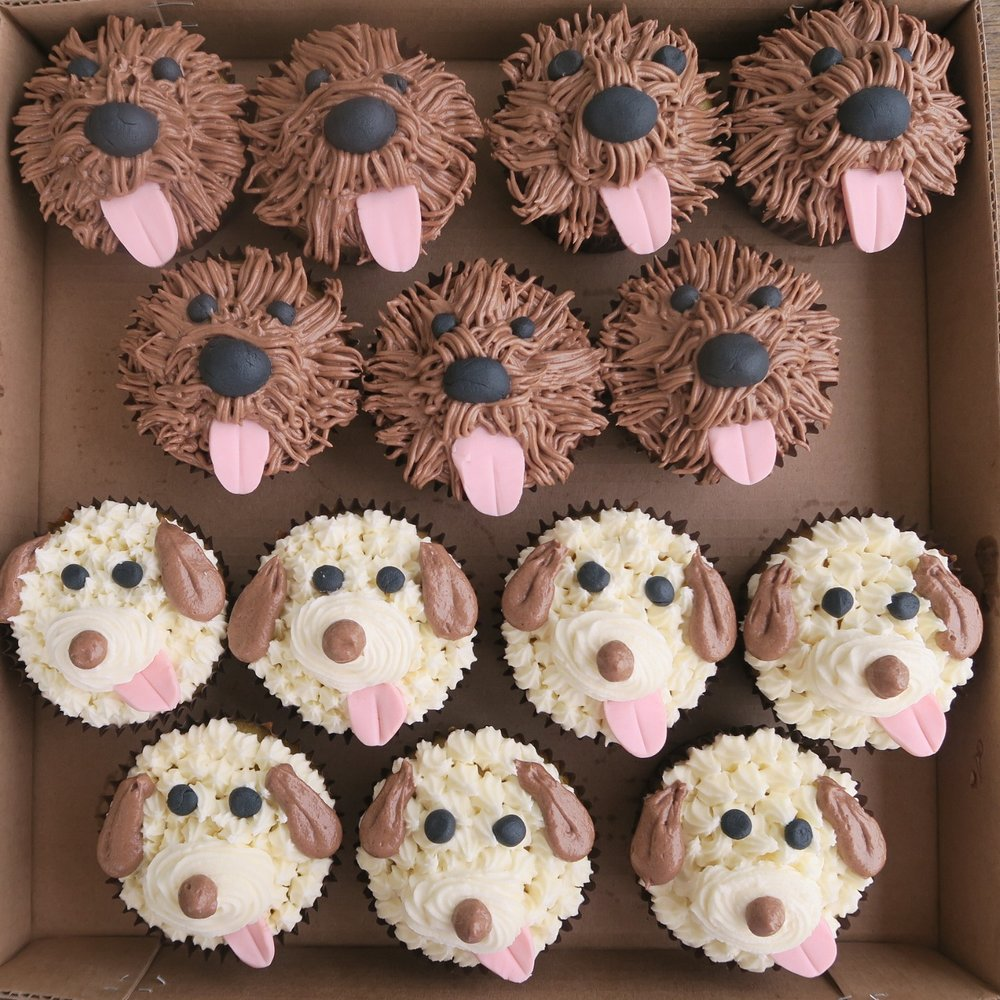 Dog faces.jpg