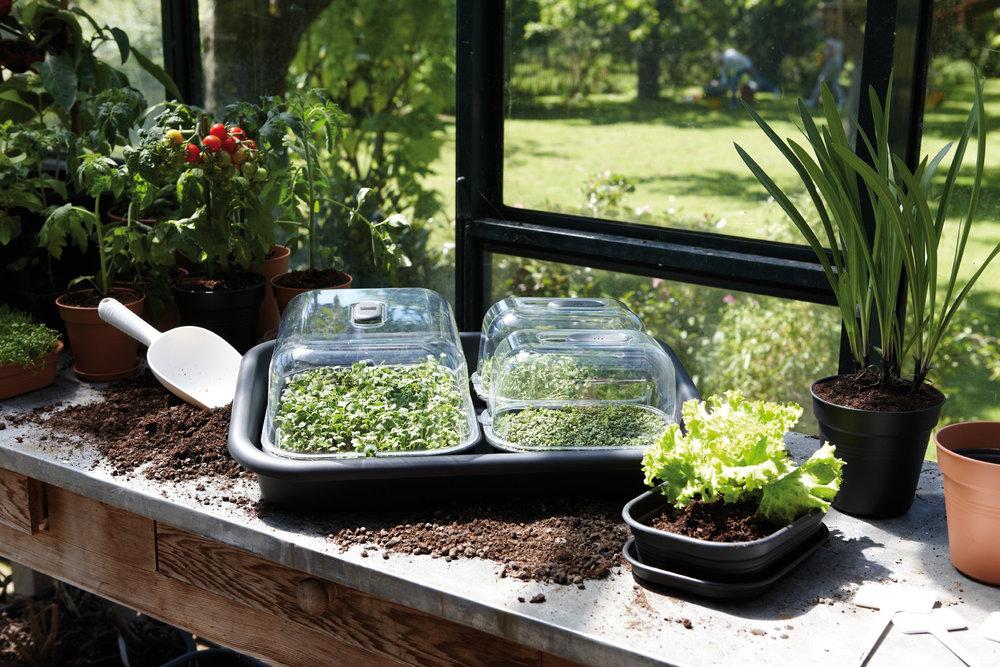 green basics garden tray.i2-2.jpg