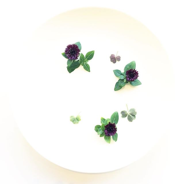 Bachelor Button. Pluto Basil. Wood Sorrel. Grown in Manhattan, picked today. Chefs browse our range at the link in our bio. #white #flowers #salad #minimal #vegansofinstagram #food #foodie #foodstagram #foodporn #basil #farm #urbanag #urbanagriculture #leaves #vegan