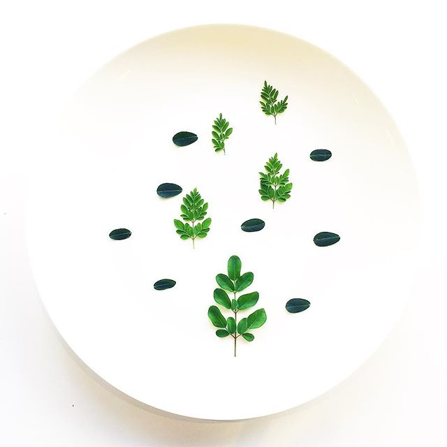 Mornings. Peanut Leaf. Grown in downtown Manhattan in the warm environment of Farm.One. Browse and buy today, link in bio. #minimal #foodporn #foodie #nycfood #foodstagram #food #plating #chef #cheflife #vegansofig #vegan #minimal #moringa #peanut
