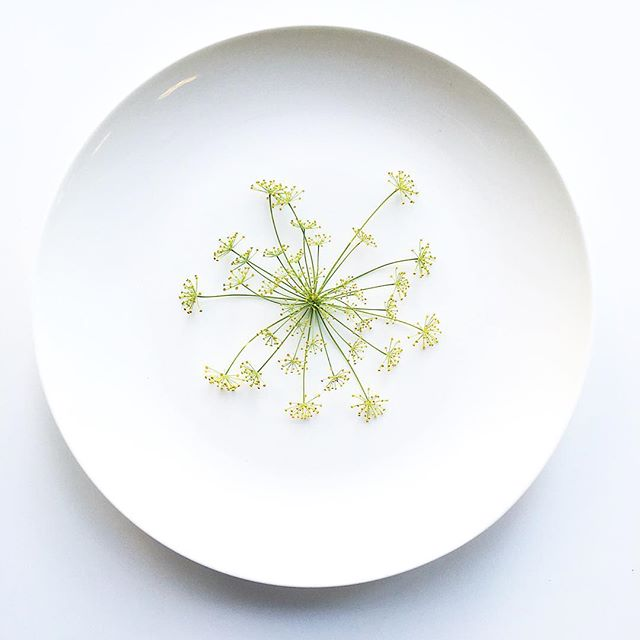 Dill Crown. . . Grown in Manhattan. #minimal #plating #chef #cheflife #dill #herbs #plantbased