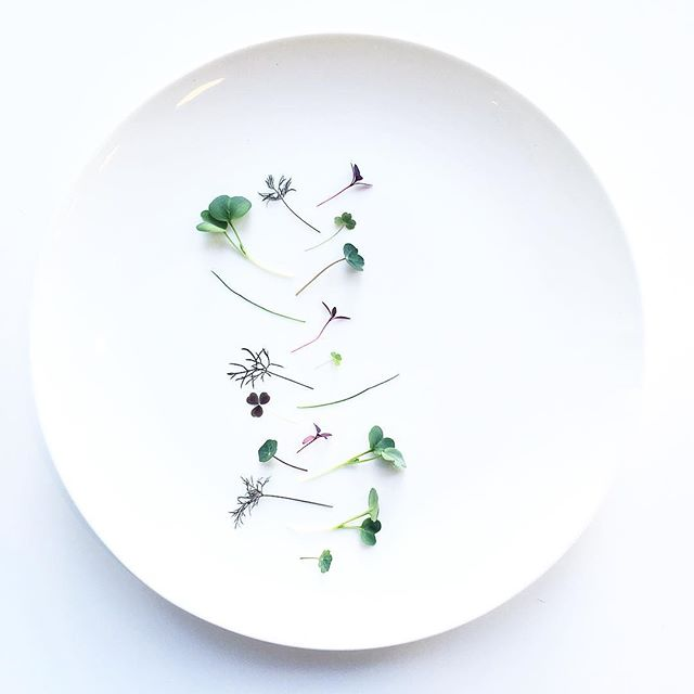Kaiware. Nasturtium. Red Amaranth. Bronze Fennel. Garlic Chives. Grown in downtown Manhattan while we are in the middle of construction in TriBeCa. #foodporn #foodstagram #plating #chef #cheflife #produce #micro #minimal #salad #probablynotenoughfordinner