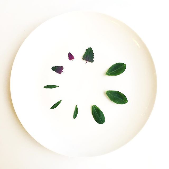 Magenta Spreen. Peanut Leaf. Epazote. Grown in Manhattan happily while the weather is awful outside. #foodporn #foodstagram #plating #vegan #vegansofinstagram #herbs #magenta #peanut #epazote #nycfood #foodie #chef #cheflife #plantbased #urbanag #urbanagriculture #farm #minimal #white