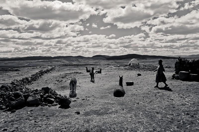 18_18_llamas.jpg