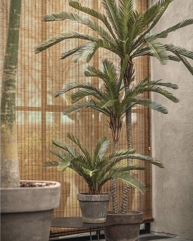 NIEUW ZIJDE PLANTEN @ WURPEL!  Te druk om voor je planten te zorgen? Toch een gezellige sfeer in je huis of op kantoor?  Wij hebben de oplossing... wat vind je ervan?  #zijde #silk #wurpelbloembinders #planten #onderhoudsvrij 👌 #mooi #sfeer #groen #kantoor #green #office #interieur #interior