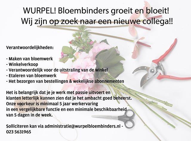 Wurpel! Groeit en bloeit.... #werk #bloemen #bloemenwinkel #hoofddorp #gezellig #team #ambacht