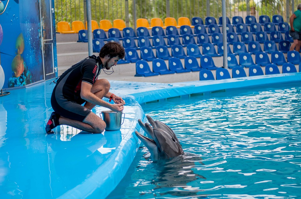 "Research has shown that Dolphin trainers who use the ""jackpot"" method are more effective"
