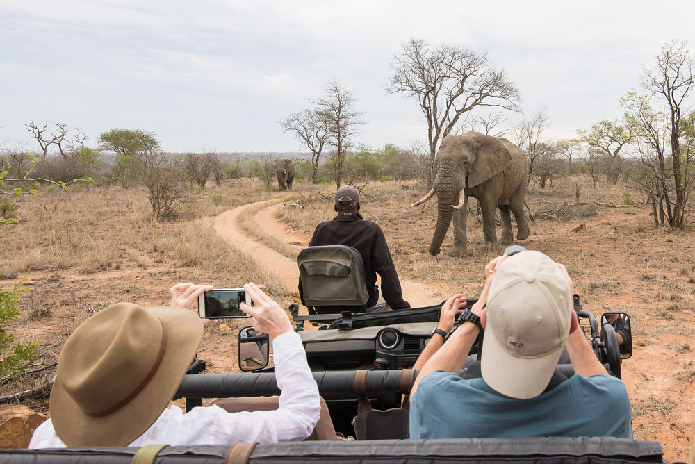 Backing Up Before Pissing Off the Elephants