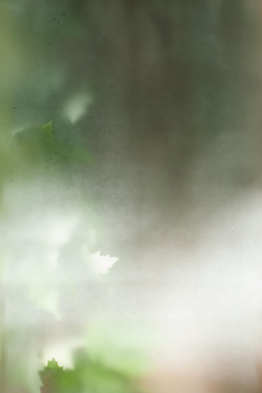 _MG_2190.jpg