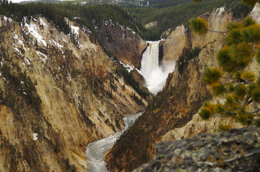 Every member of my family says the Grand Canyon of Yellowstone was one of the most memorable parts of our trip. We could've stayed there for hours.