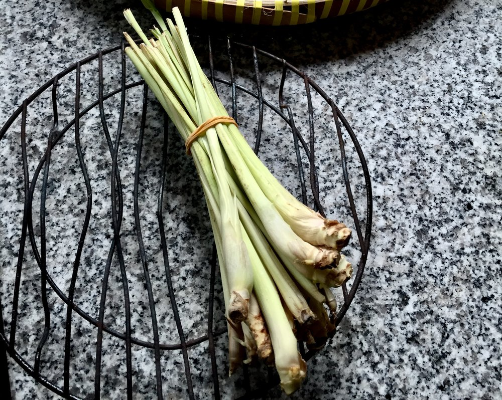 A stalk of fresh lemongrass