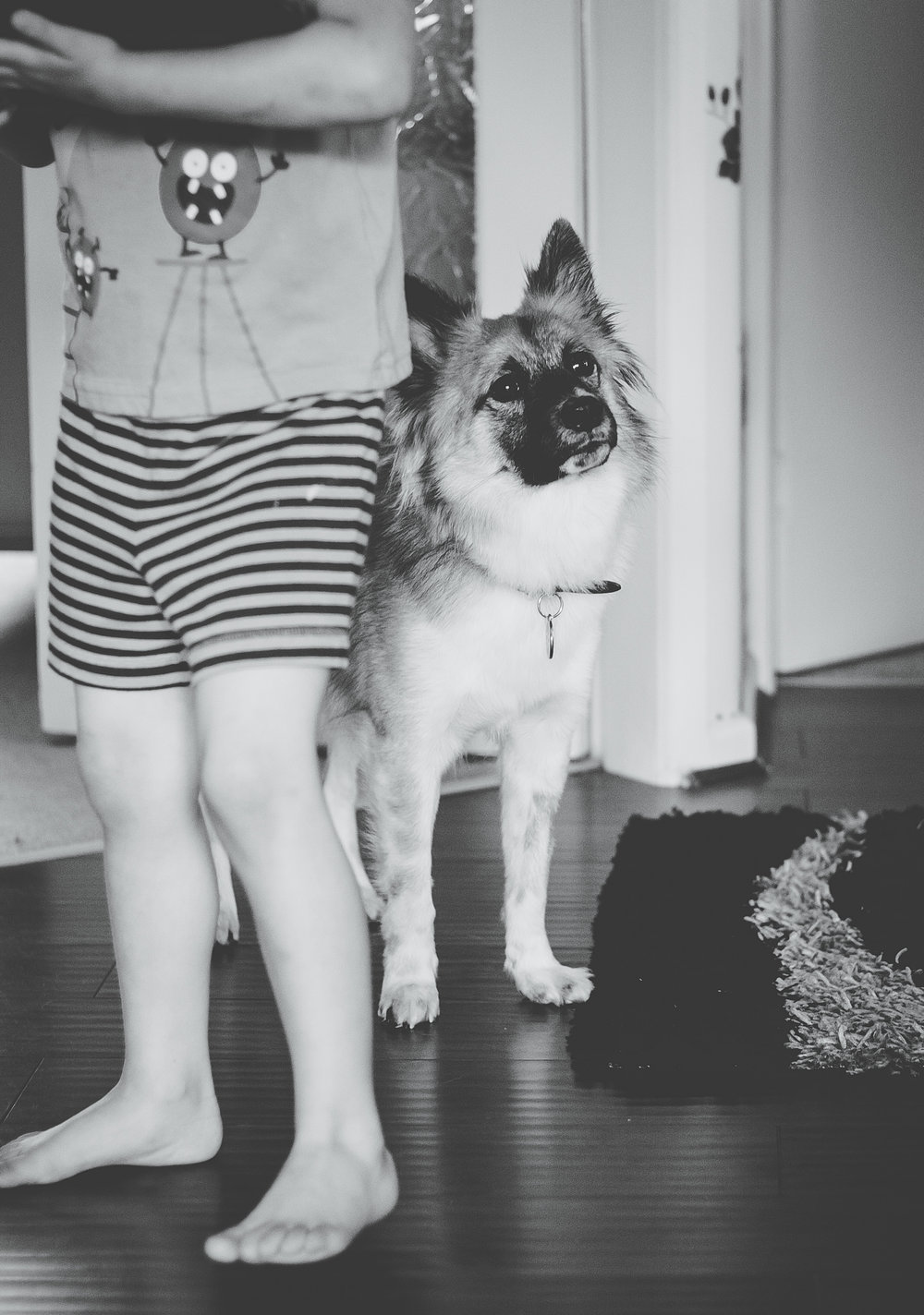 The family dog, black and white photograph