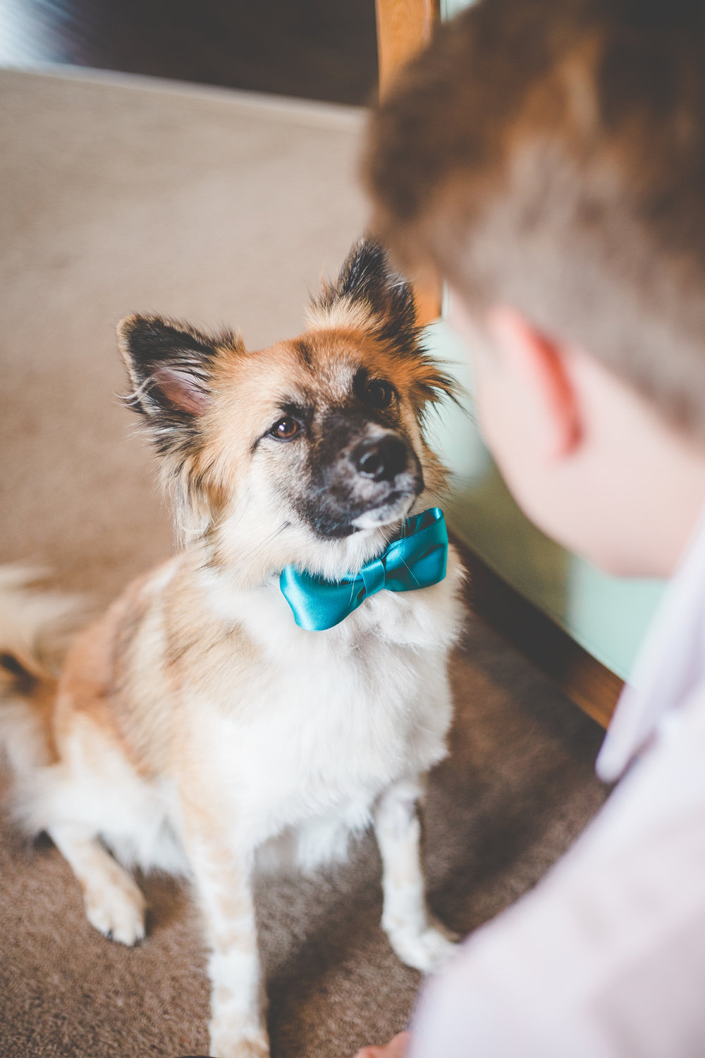 The family dog with a green bow tie on- Creative wedding photography in lancashire