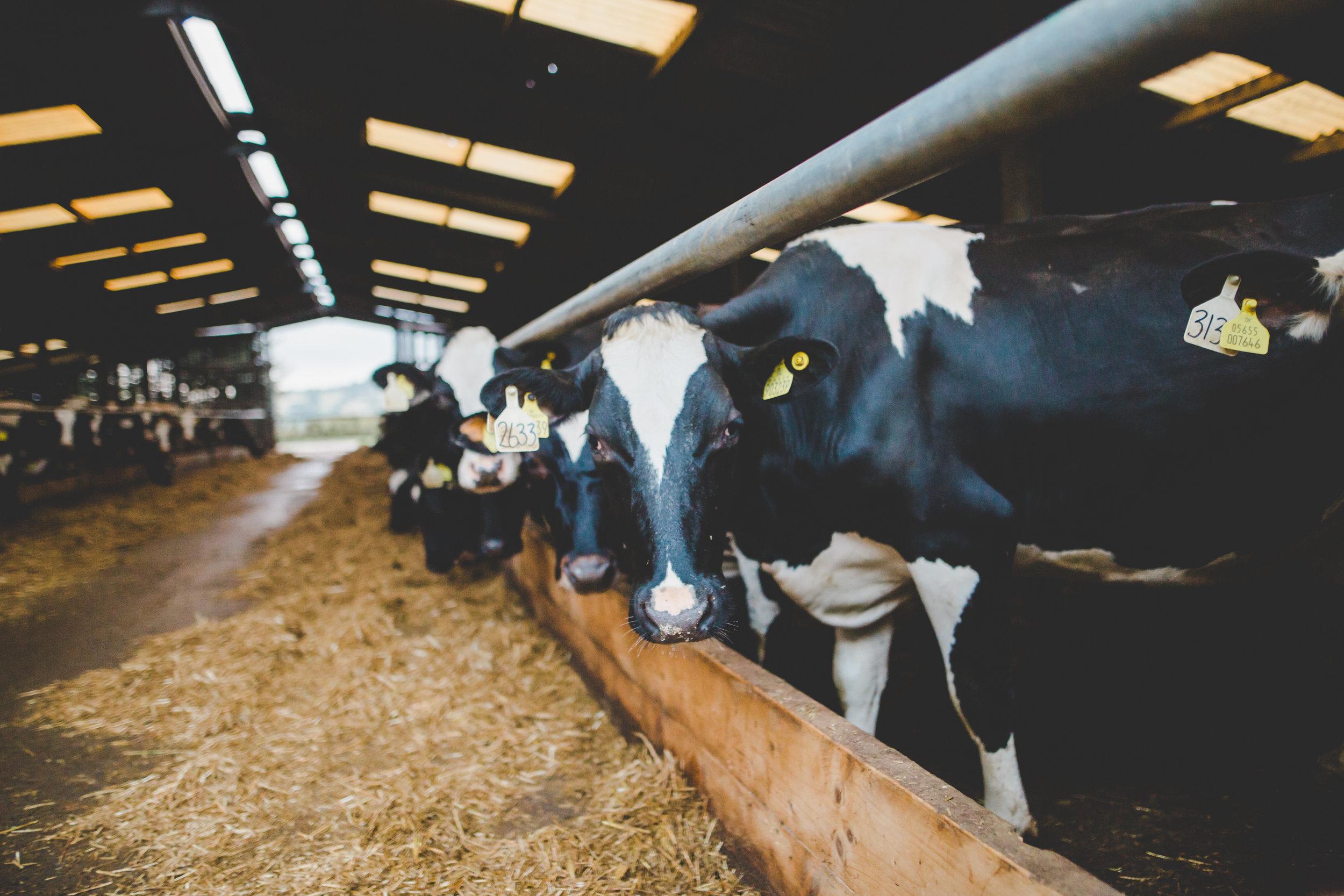A farm wedding in Lancashire