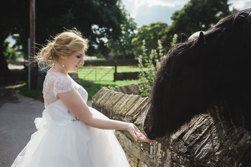 the bride feeding one of the horses- Documentary wedding photography