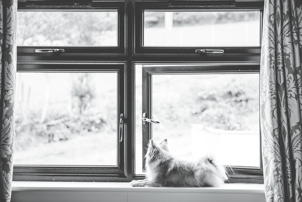 The couples dog sat by the window, Black and white photography, documentary photography.