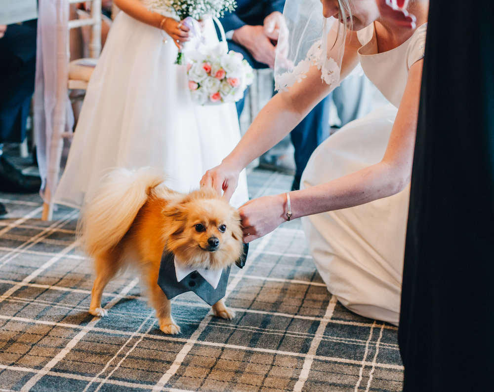 Putting a bib on the dog ready for the lake district wedding, documentary wedding photography, creative photography.