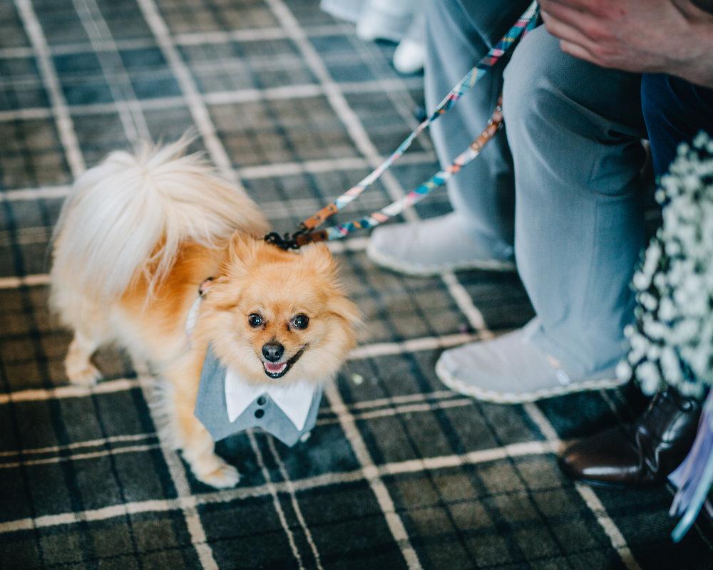 The dog smiling away, same sex wedding, wedding at the lake district.
