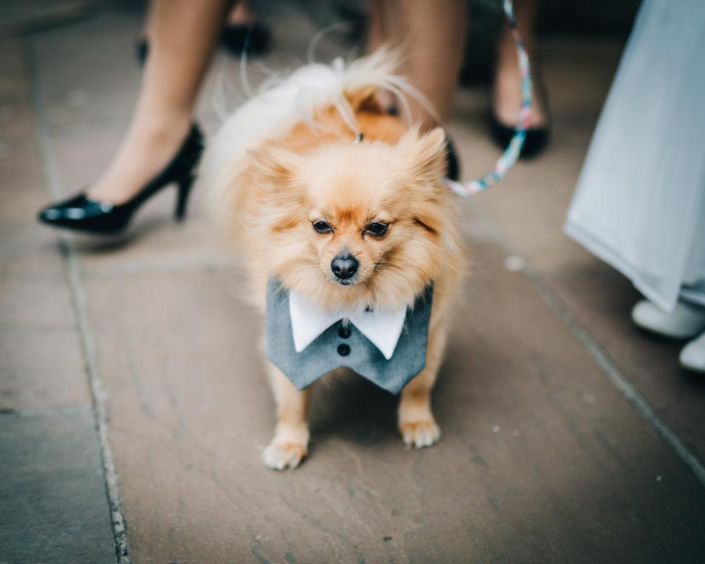 Dog of the brides, pastel themed wedding, Lancashire photographer, wedding at the Lake District.