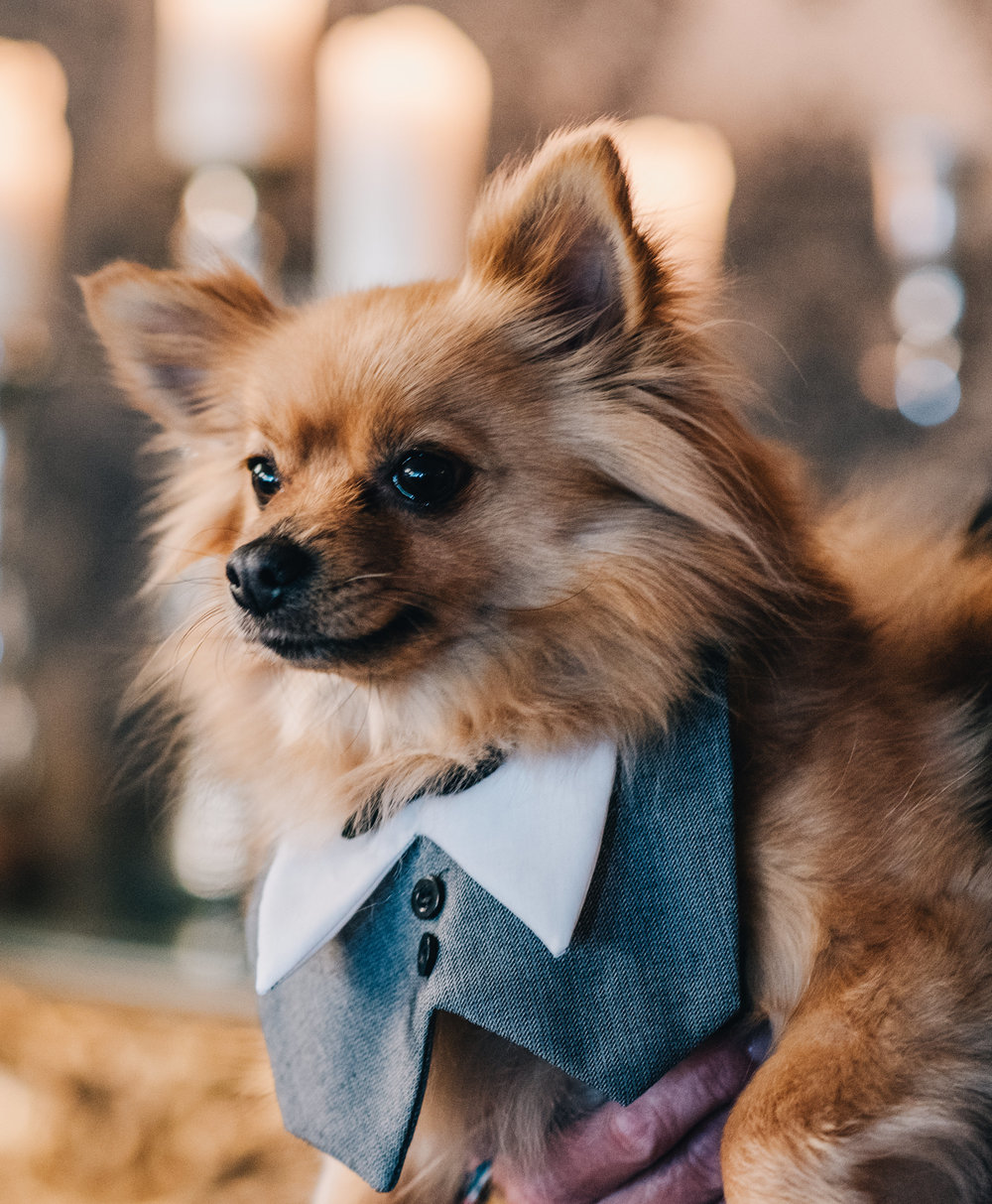 Dog of the brides, lake district wedding, same sex couple.