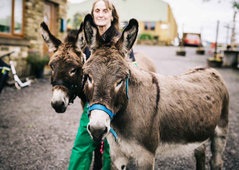 Donkeys are at the quirky colourful wedding in Lancashire, Creative Photography.