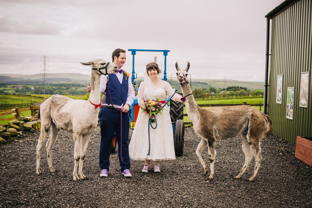 The bride, groom and two alpacas, Wellbeing Farm for a wedding, Creative Lancashire Photographer.