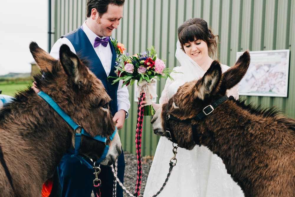 The bride, groom and two donkeys, Wellbeing farm, Quirky fun wedding.