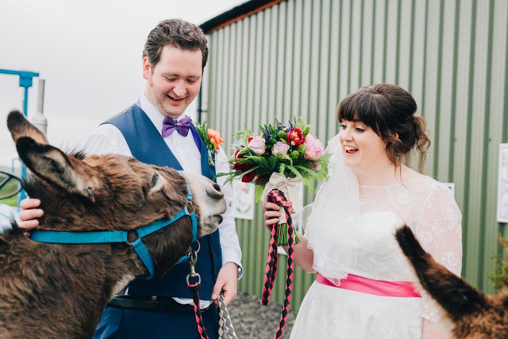 Quirky fun wedding, donkeys at the wedding.